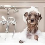 Σαμπουάν Σκύλων για Μακρύ Τρίχωμα (250ml) Argital Mi Fido