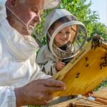Παστίλιες Λαιμού με Μέλι Μανούκα MGO 500+ (16τμχ) Nui Honey