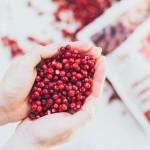 Κόκκινα Μύρτιλα (Lingonberries) Ωμά Αποξηραμένα - Χωρίς Ζάχαρη - Biosophy