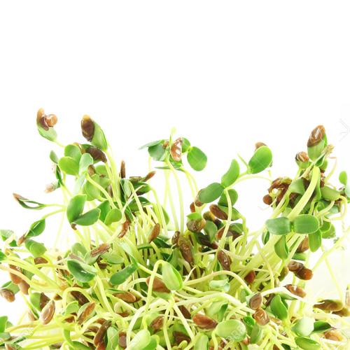 Σπόροι Λιναριού (Λιναρόσπορος) για Φύτρα (1000γρ) Βiosophy