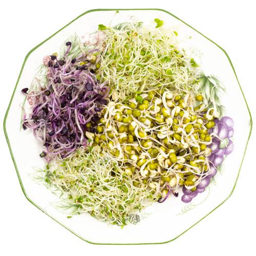 Μιξ Σπόρων για Φύτρα 'Andante' - Ροβίτσα, Αλφάλφα, Ροζ Ρεπάνι (200γρ) Βiosophy
