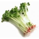 Σπόροι Μπρόκολου για Φύτρα (100γρ) Βiosophy