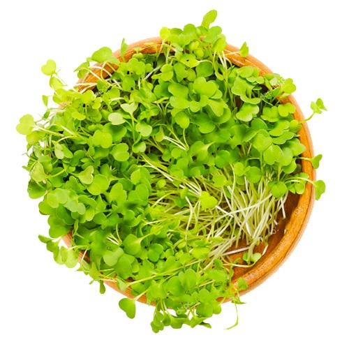 Σπόροι Ρόκας για Φύτρα (250γρ) Βiosophy