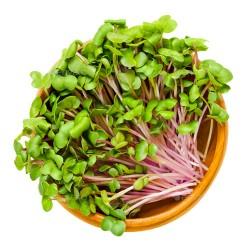 Σπόροι Ροζ Ραπανάκι για Φύτρα (200γρ) Βiosophy